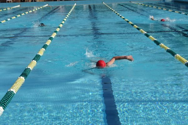 2019 College Swimming Carnival