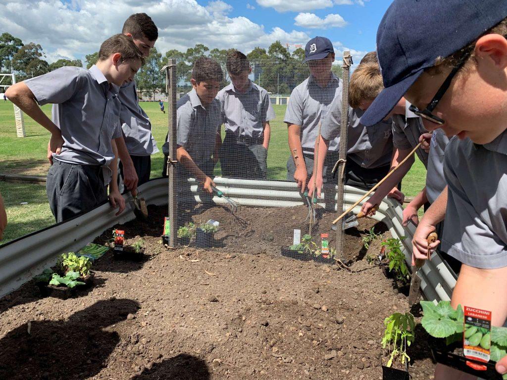 Year 8 TAS Preparing Vegetable Crops